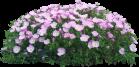 Семена и цветочные луковицы - Интернет-магазин «Строительный двор Морозов»