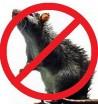 Средства от мышей и крыс - Интернет-магазин «Строительный двор Морозов»