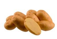 Картофель семенной ИМПАЛА Элита 1кг 029878 - Интернет-магазин «Строительный двор Морозов»