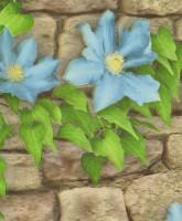 Обои бумажные водостойкие 0,53х10м С1БР-ГП Комфорт Клематис-8 голубые цветы Брянск - Интернет-магазин «Строительный двор Морозов»