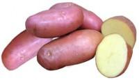 Картофель семенной РОЗАРА Элита 1кг 029892 - Интернет-магазин «Строительный двор Морозов»